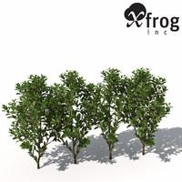 cherry laurel plants 3d model