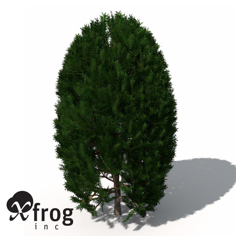 english yew tree shrub 3d model