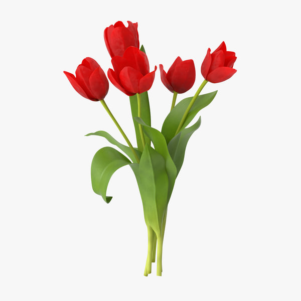 3d red tulips bouquet -