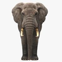 3d realistic elephant model