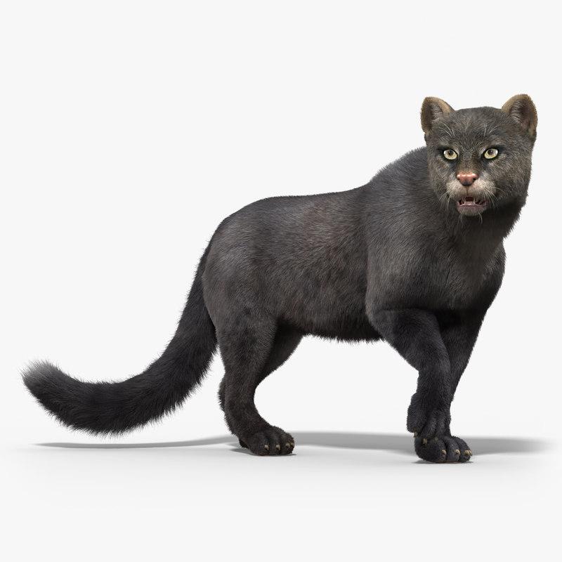 3d jaguarundi cat fur rigged