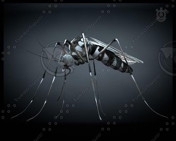 mosquito 3d max