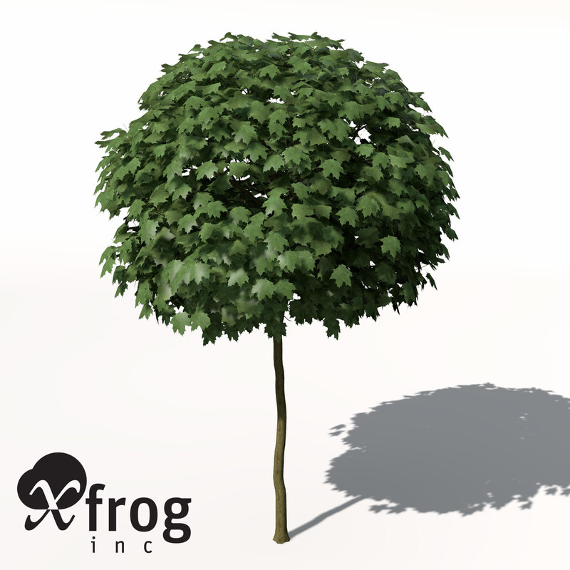 3d xfrogplants norway maple tree