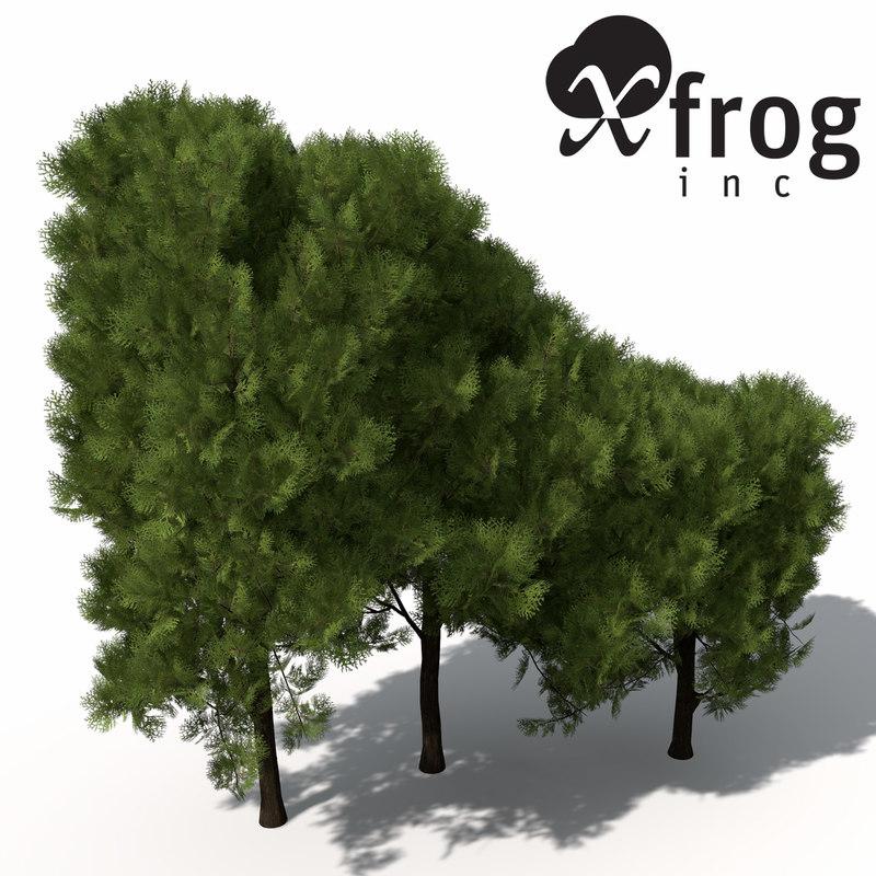 3d model xfrogplants western red cedar