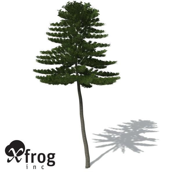 3ds max xfrogplants norfolk island pine
