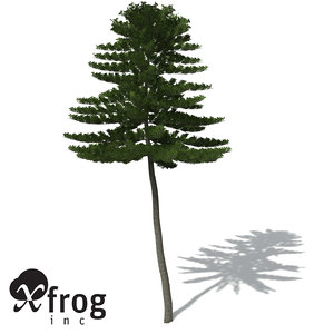 3ds max xfrogplants norfolk island pine