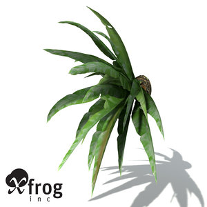 3d xfrogplants bird s nest model