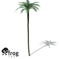 XfrogPlants Black Treefern