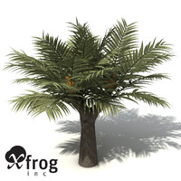 XfrogPlants Bread Palm