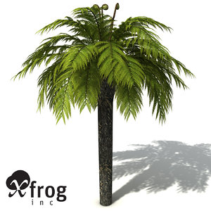 tasmanian treefern tree fern 3d model