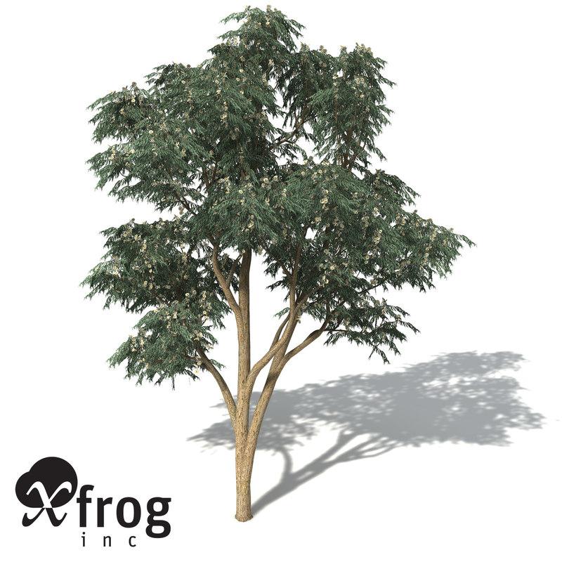 blue-gum eucalyptus tree blue 3d model