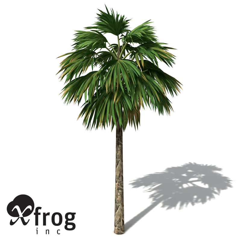 3ds max xfrogplants hillebrand palm