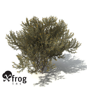 3ds xfrogplants true mulga tree shrub