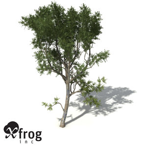 roughbarked apple tree bark 3d model