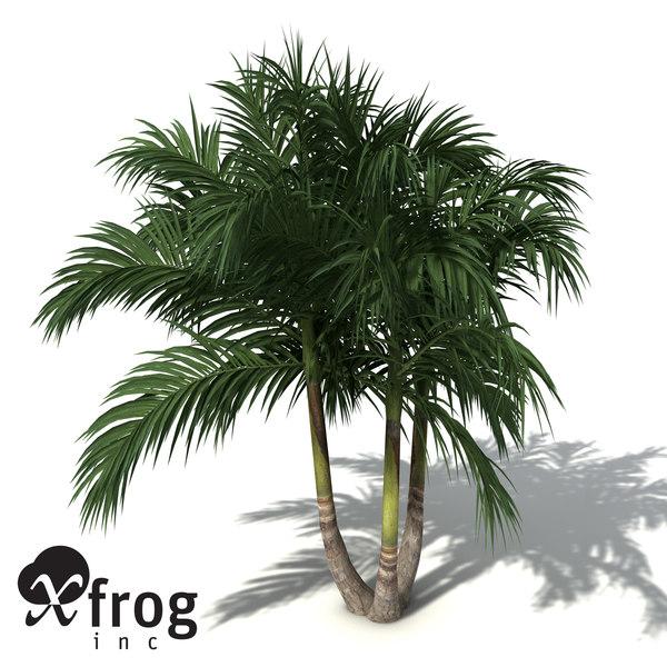 bangalow palm 3d model