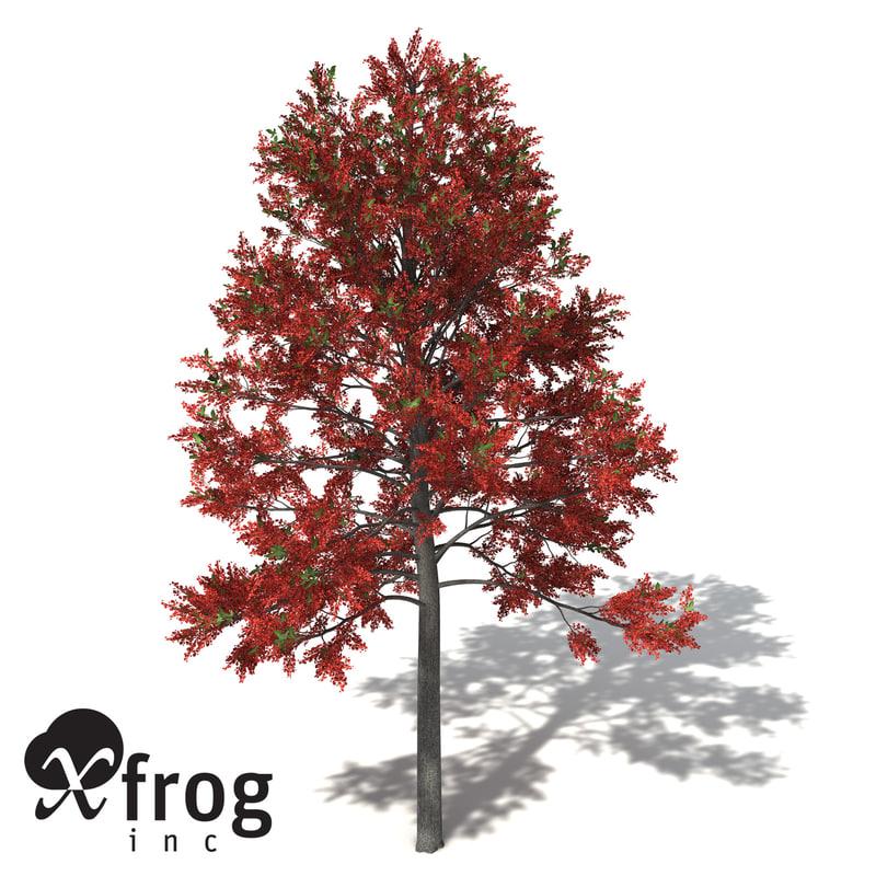 3d model xfrogplants illawarra flame tree