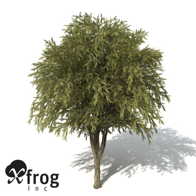 3d xfrogplants willow bottlebrush tree model