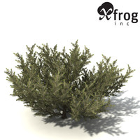 XfrogPlants Common Net Bush