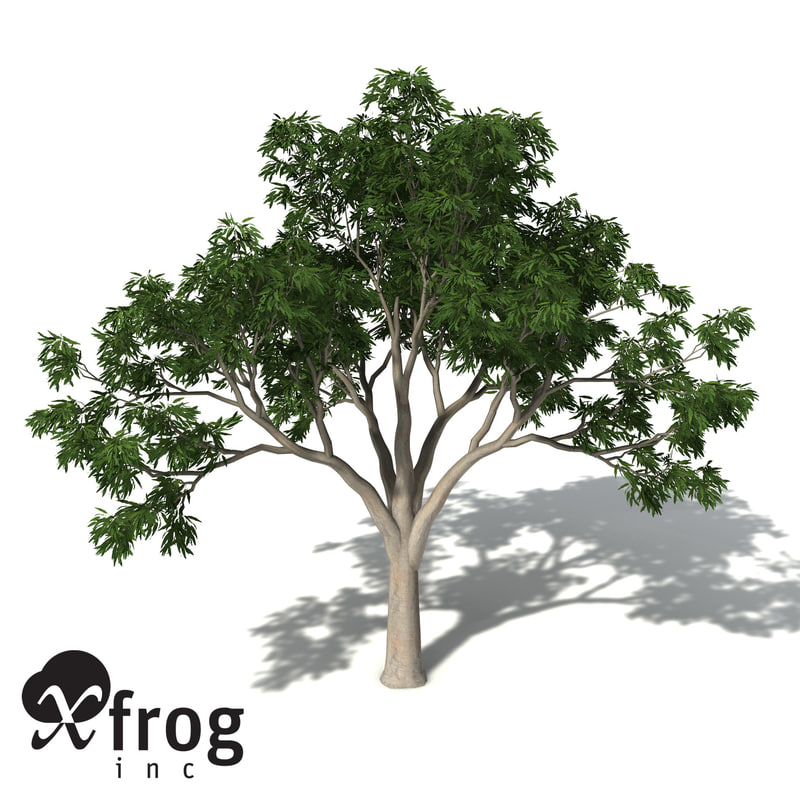 3d xfrogplants ghost gum tree