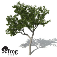 XfrogPlants River Redgum