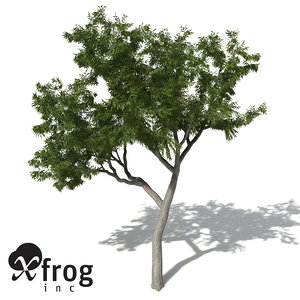 xfrogplants river redgum tree 3d 3ds
