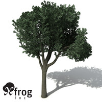 3d model xfrogplants rusty fig tree