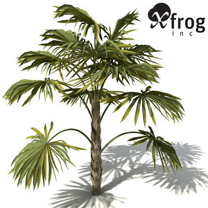 max xfrogplants australian cabbage palm