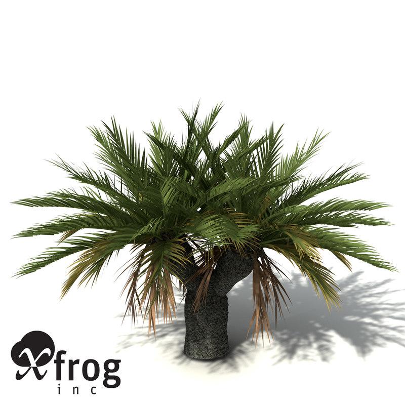 xfrogplants gorge macrozamia plant 3d model
