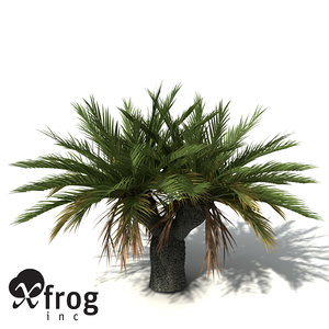 xfrogplants gorge macrozamia plant 3d model