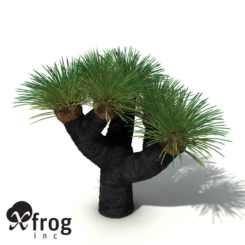 3d model xfrogplants australian grass tree