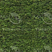 Hedge001_1024.jpg