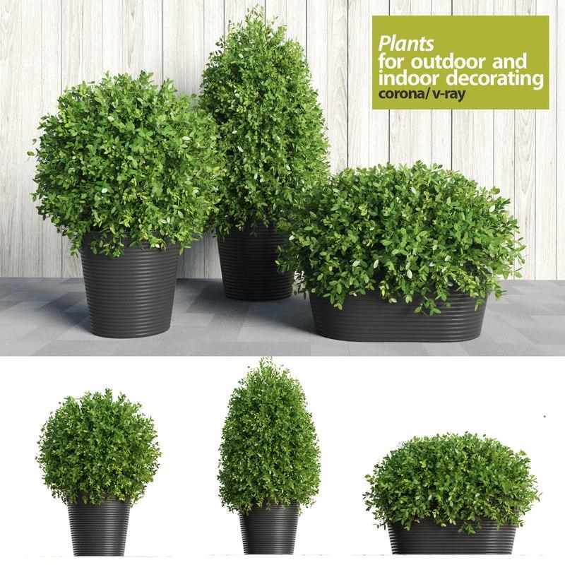 max plants indoor outdoor