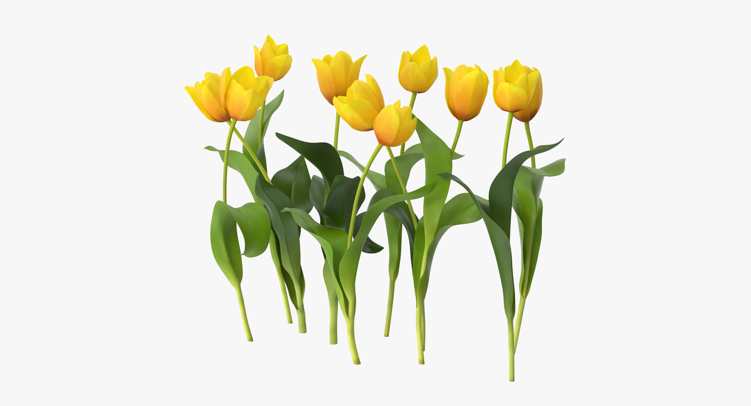 3d model tulips yellow - grouped