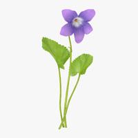 3d violet single standing - model