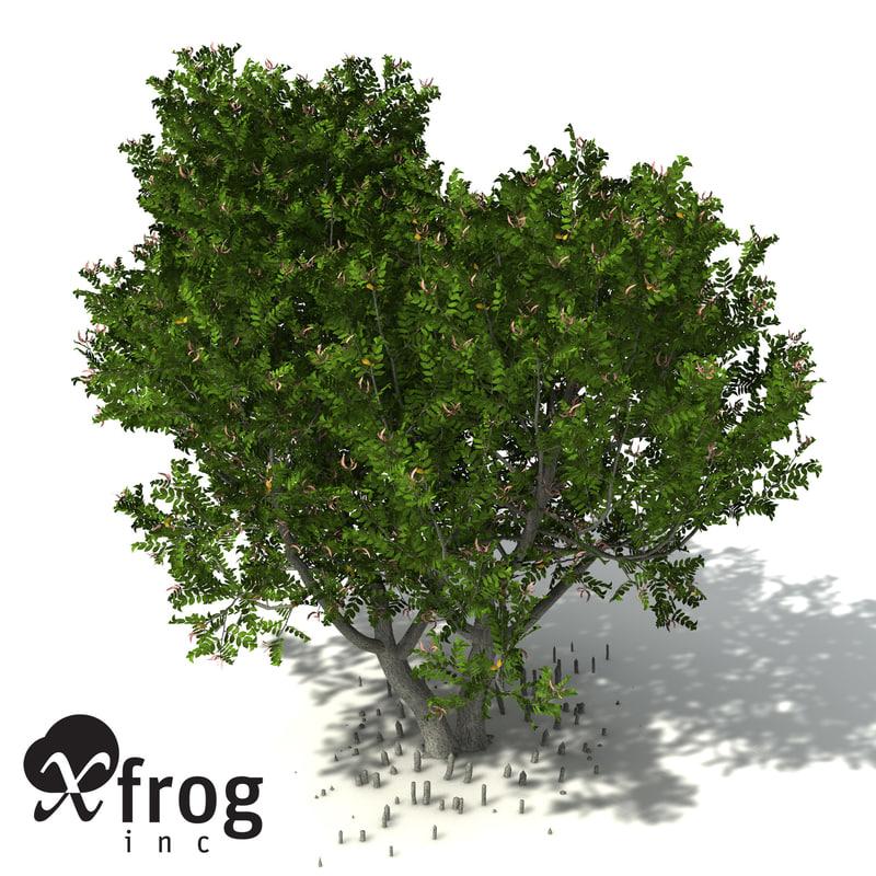 grey mangrove tree tropical 3d model