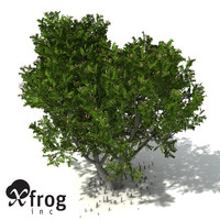 grey mangrove tree tropical 3d model