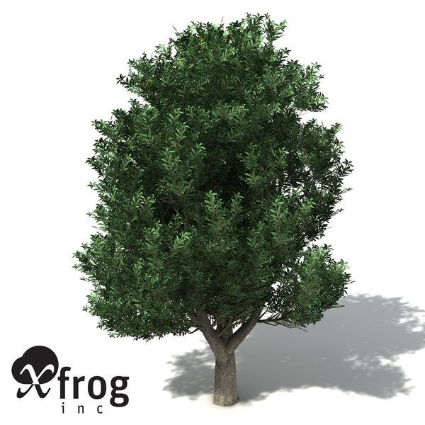 3d model of xfrogplants coast banksia tree