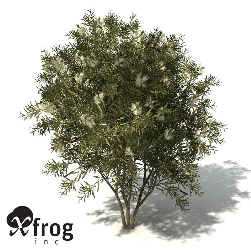 lemon bottlebrush tree 3d model