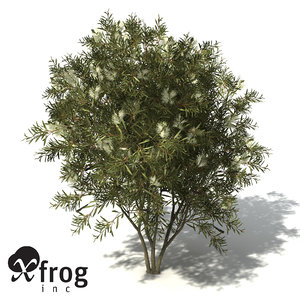 lemon bottlebrush tree 3d model
