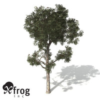 manna gum tree 3d model