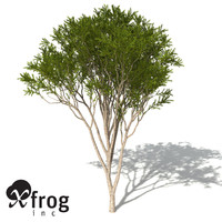 lightwave xfrogplants australian tea tree