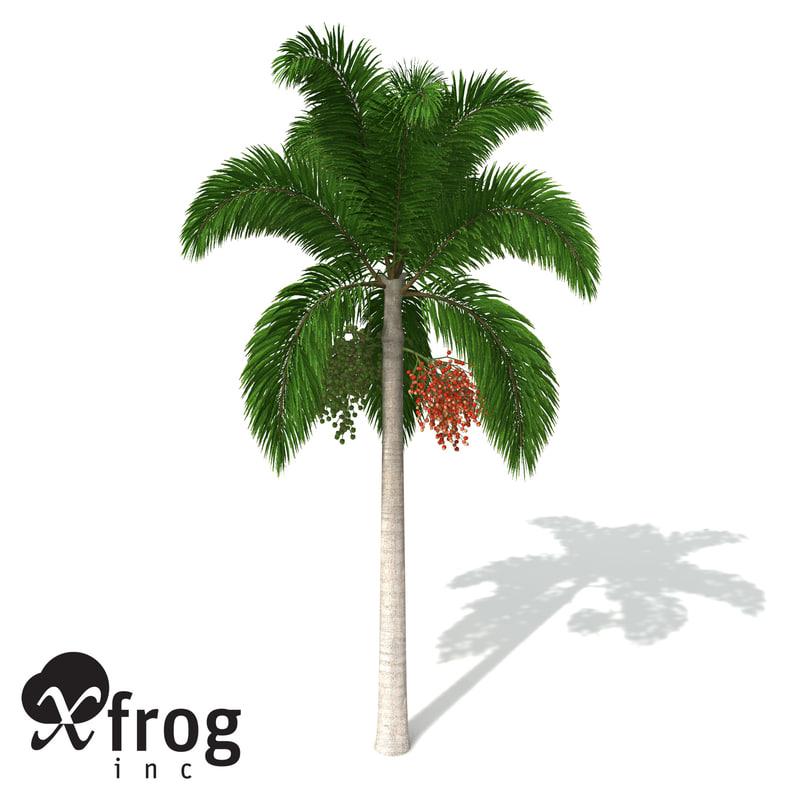 xfrogplants foxtail palm plants 3d obj