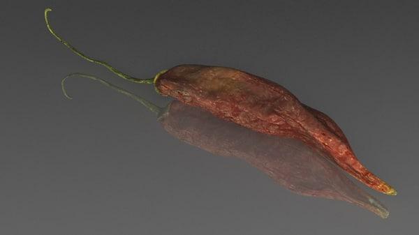 chile 3d model