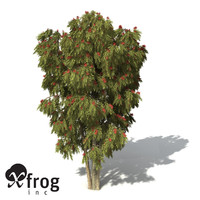 xfrogplants weeping bottlebrush tree shrub 3d max
