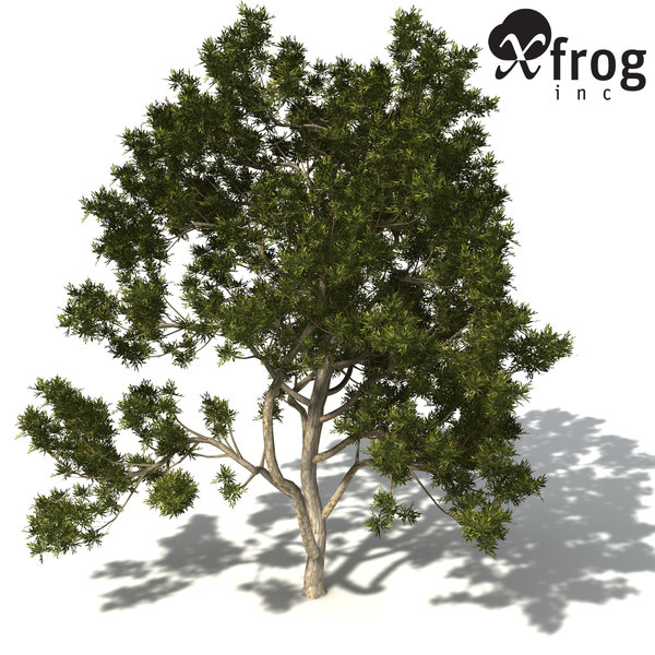 xfrogplants spotted gum tree 3d 3ds