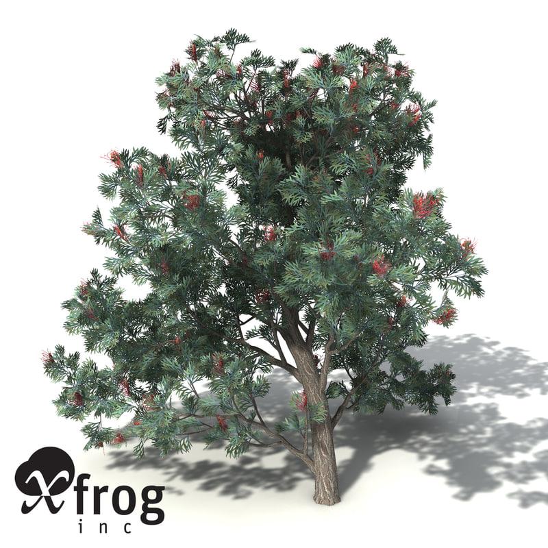 red silky oak tree 3d model