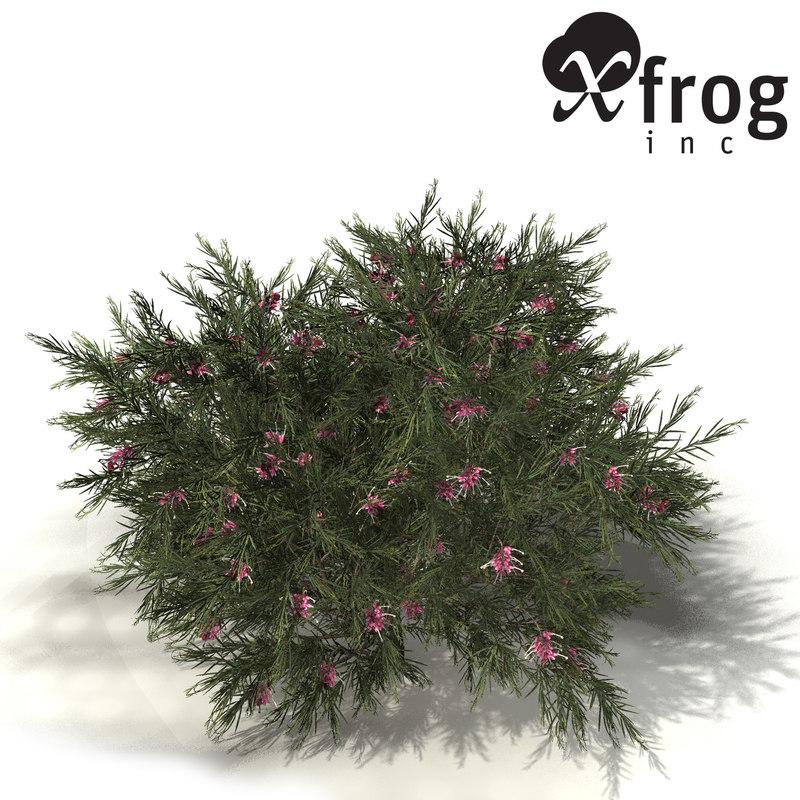 3d xfrogplants rosemary grevillea plant model