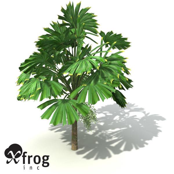 3d xfrogplants queensland fan palm