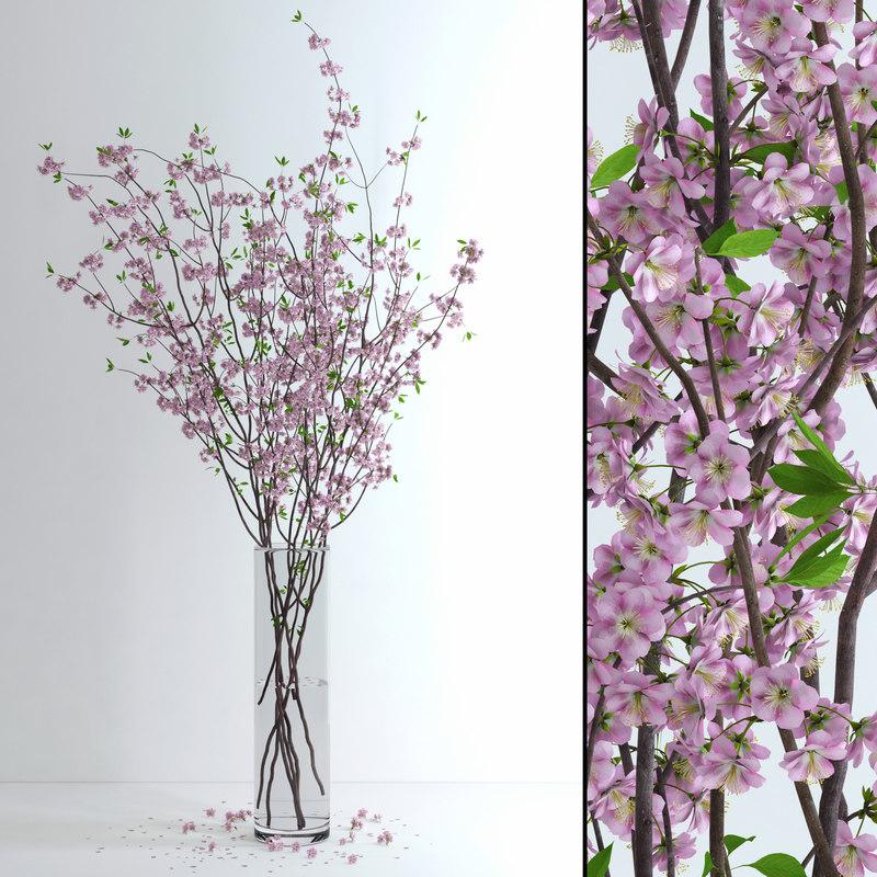 vase cherry blossom flowers 3d max