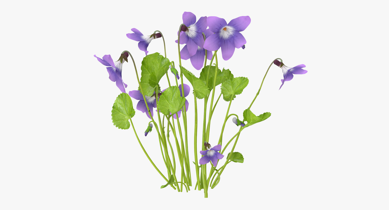max violet natural group -